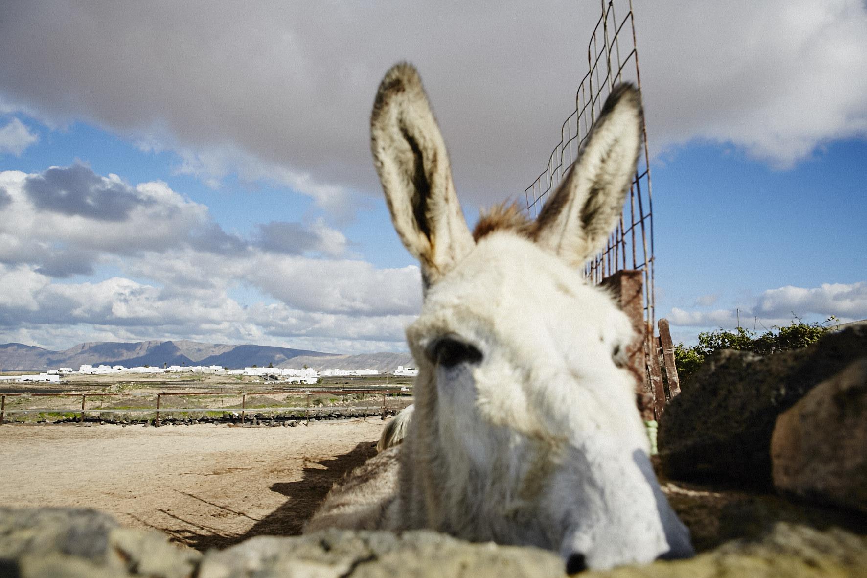 Lanzarote_14_1343